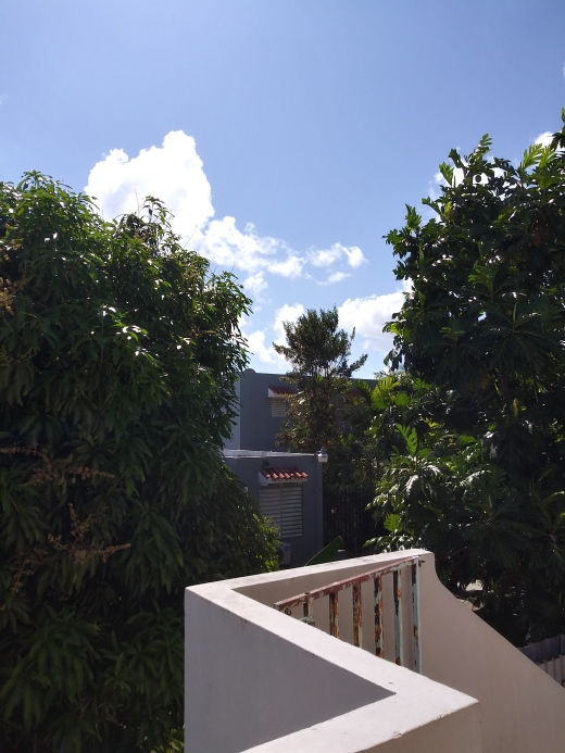 Backyard trees San Juan Puerto Rico Santurce Sun